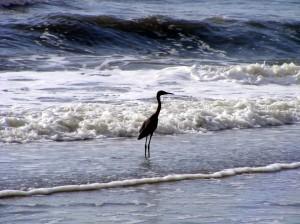 Stork Jacksonville Beach