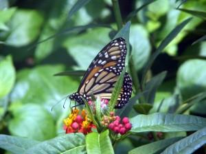 Butterfly Tree Hill
